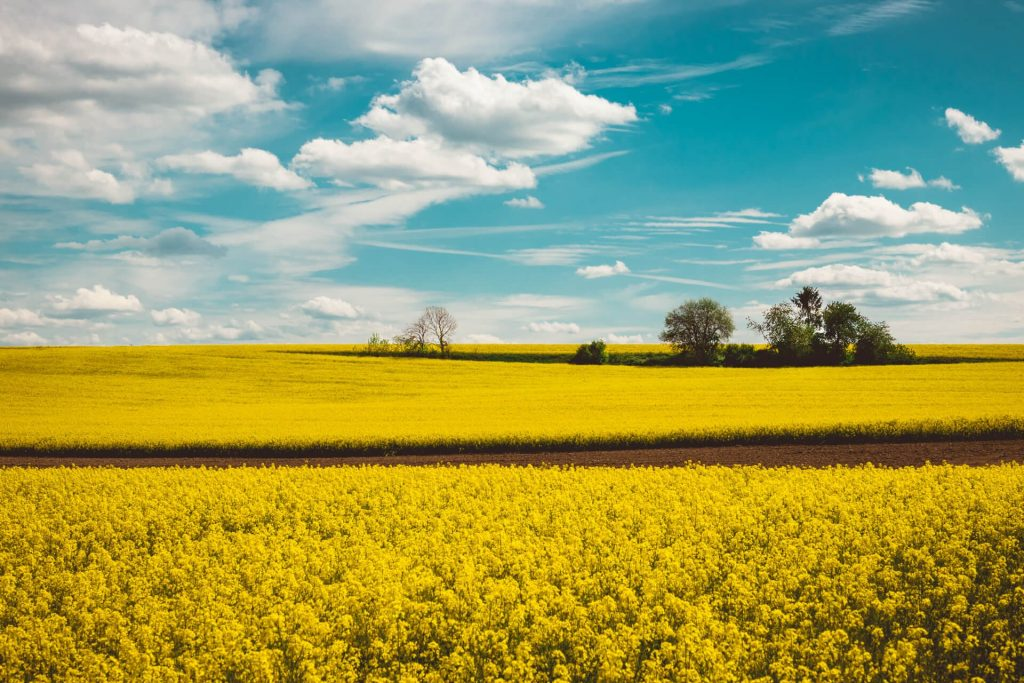 Landscape Photography - German field
